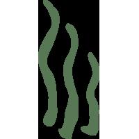 Biodynamic Nympha_icona alghe_200x200