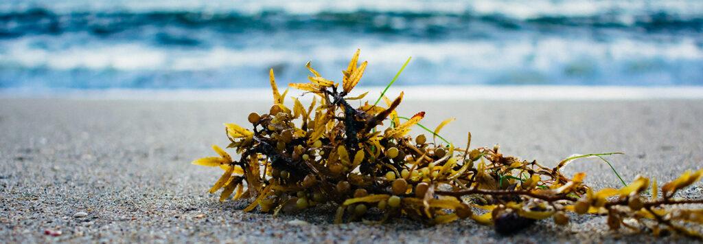 alghe in riva al mare